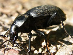 Image insecte